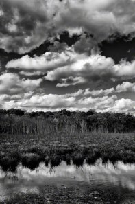 B&W At the Swamp