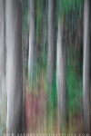 blurrytrees