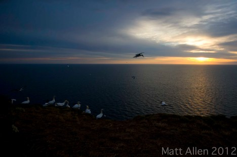 Sunrise gannets
